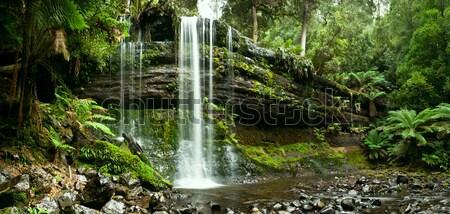 Veld park centraal tasmanië najaar boom Stockfoto © 3523studio