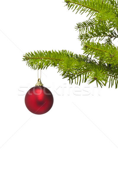 One red decoration ball in Christmas tree branch Stock photo © 3523studio