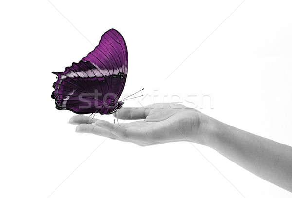 蝶 手 孤立した 白 女性 美しい ストックフォト © 3dvin