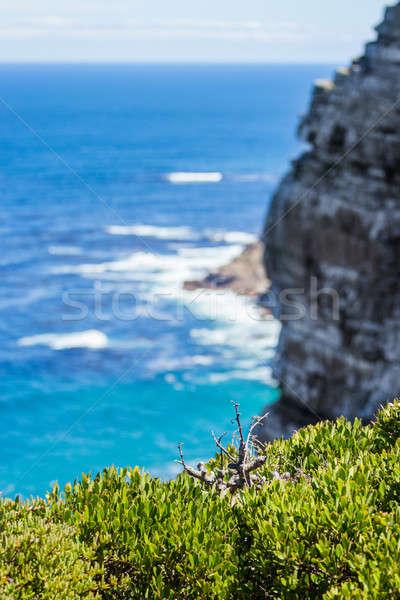 Doğa manzara Cape Town şehir yüksek uçurum Stok fotoğraf © 3pphoto31
