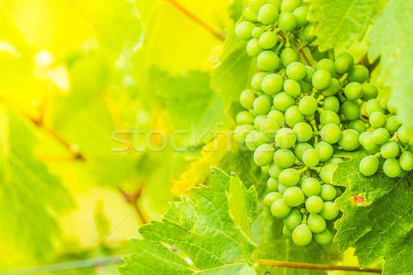 Vin vert coup été chaud Photo stock © 3pphoto31