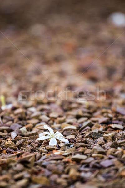 Zemin beyaz taze küçük kayalar Stok fotoğraf © 3pphoto31