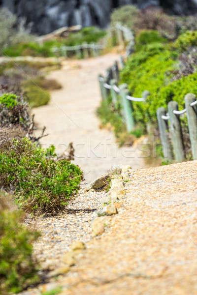 Doğa nokta Güney Afrika ağaç Stok fotoğraf © 3pphoto31