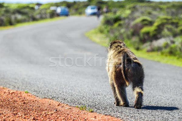 Maymun yol yürüyüş Cape Town gökyüzü Stok fotoğraf © 3pphoto31