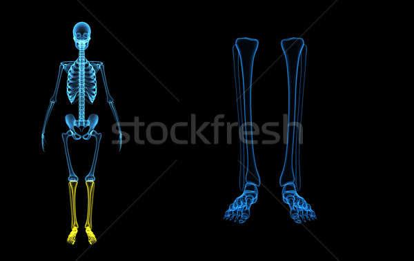 Skelet benen structuur lichaam wonen kan Stockfoto © 7activestudio