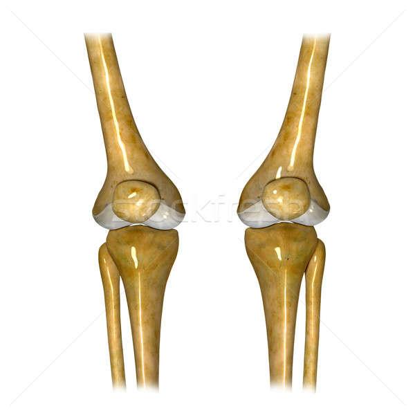 колено совместный бедро ногу два один Сток-фото © 7activestudio