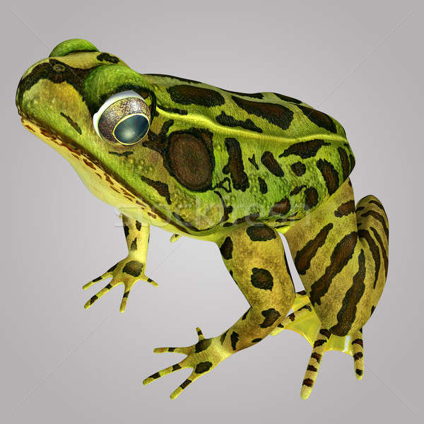 frog Stock photo © 7activestudio