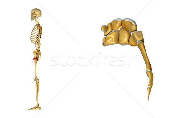 Skeleton arm Stock photo © 7activestudio