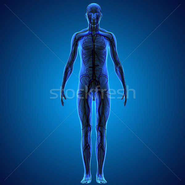 человека тело структуры голову шее Сток-фото © 7activestudio