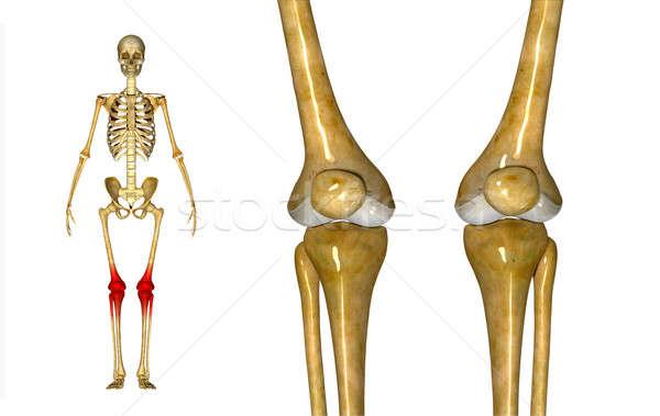 Knie gezamenlijk dij been twee een Stockfoto © 7activestudio