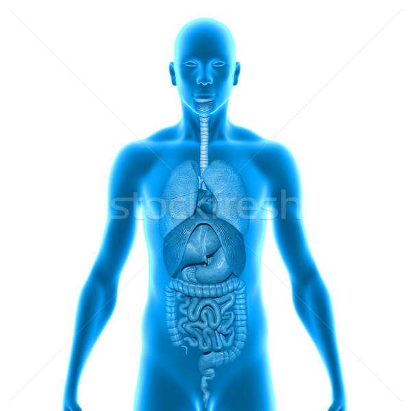 Humanismo corpo estrutura cabeça pescoço Foto stock © 7activestudio
