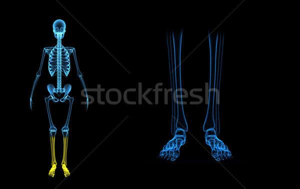Esqueleto pernas estrutura corpo vida lata Foto stock © 7activestudio