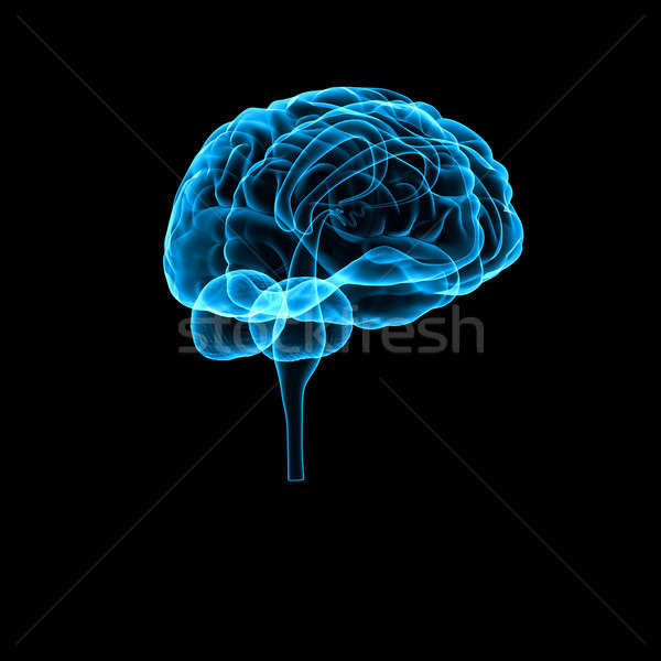 Cerveau orgue centre système nerveux tous vertébrés Photo stock © 7activestudio
