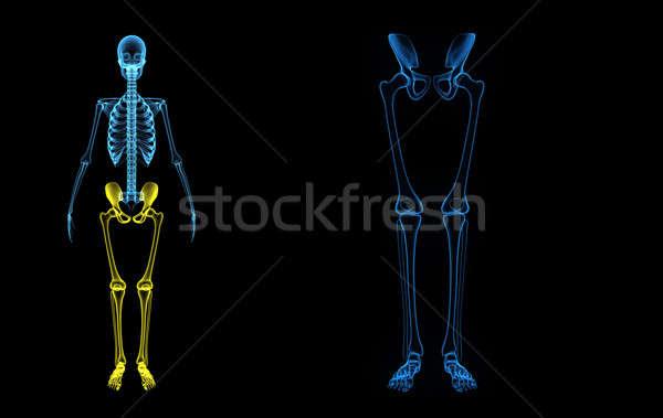Skeleton legs Stock photo © 7activestudio