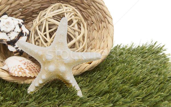 seashells in basket on grass Stock photo © 808isgreat
