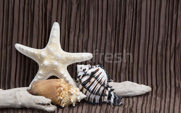 seashells driftwood on brown background Stock photo © 808isgreat