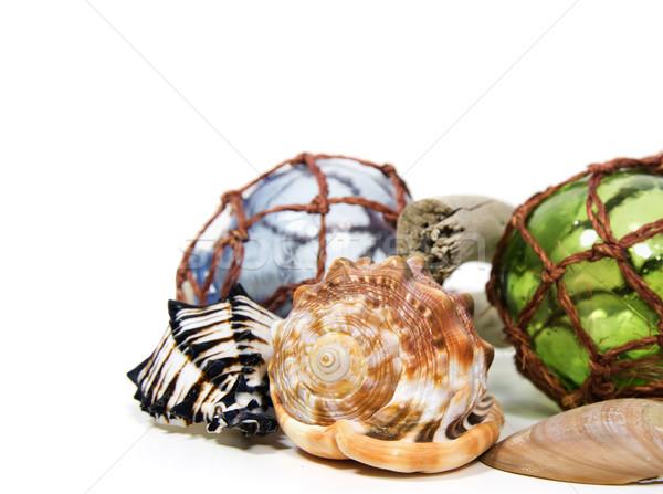Morskich martwa natura szkła muszle Widok Zdjęcia stock © 808isgreat