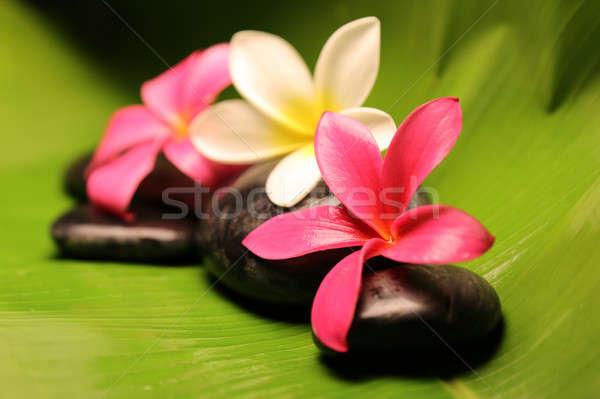 Tropical plumeria flowers on stone Stock photo © 808isgreat