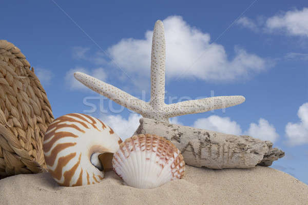 seashells and sand with blue sky background Stock photo © 808isgreat