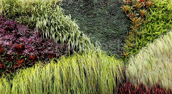 Pionowy ogród różny roślin tropikalnych rozwój Zdjęcia stock © 808isgreat
