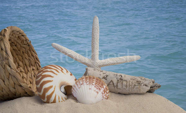 seashells and sand with ocean background Stock photo © 808isgreat