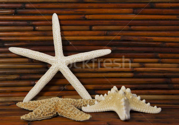 starfish with bamboo in background Stock photo © 808isgreat