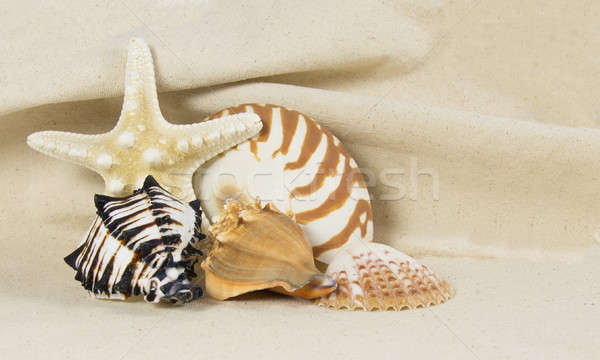 sea shell still life Stock photo © 808isgreat