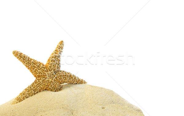 single starfish on a sand hill Stock photo © 808isgreat