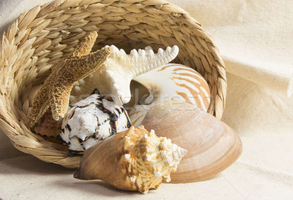 shells in a basket Stock photo © 808isgreat