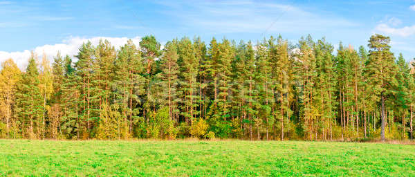Automne forêt panorama arbre herbe vert Photo stock © a2bb5s