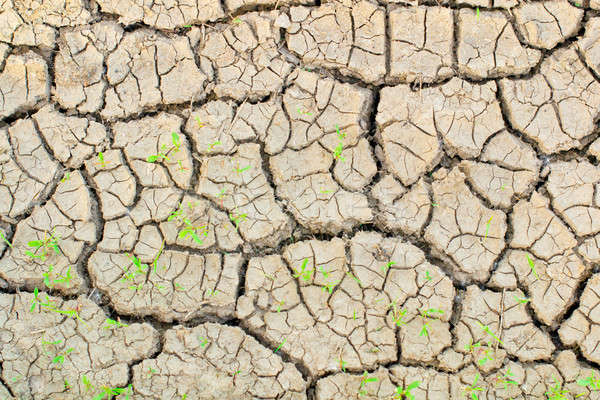 Ground drought Stock photo © a2bb5s