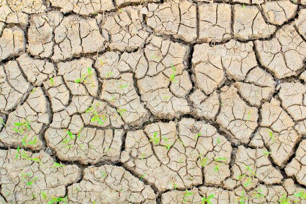 Terreno seca abstrato planta padrão sujeira Foto stock © a2bb5s