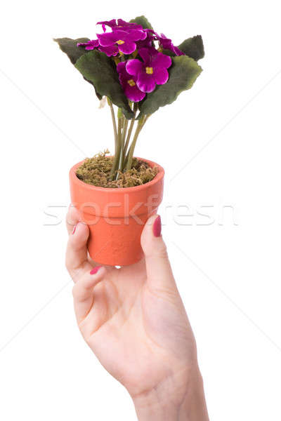 Stock photo: Woman holds a flower in a pot