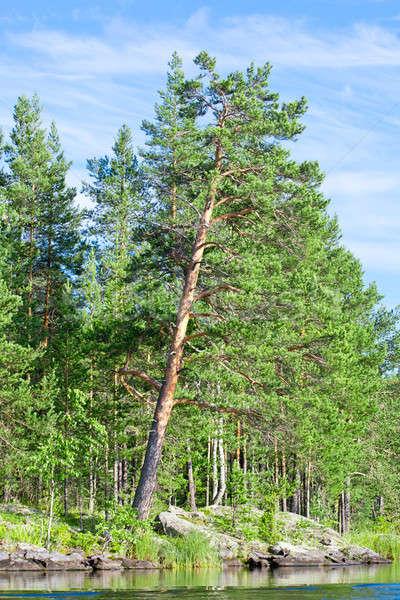 çam ağacı su çam açı gökyüzü ağaç Stok fotoğraf © a2bb5s