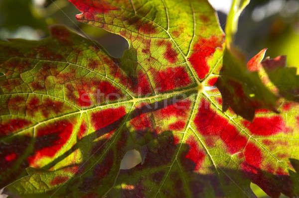 De uva hojas atención selectiva colorido alimentos Foto stock © ABBPhoto