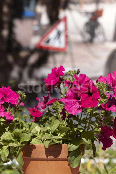 Rue fleur nature feuille rouge Photo stock © ABBPhoto