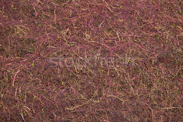Stock photo: Scraps of grapes clusters