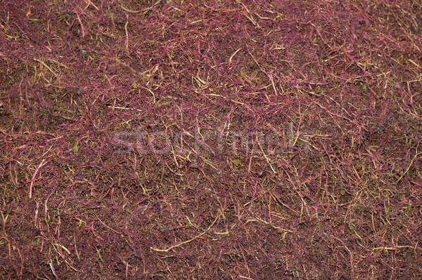 ブドウ ワイン プロセス 自然 背景 ストックフォト © ABBPhoto