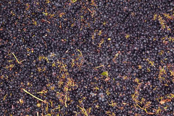 Сток-фото: виноград · вино · процесс · продовольствие · винограда