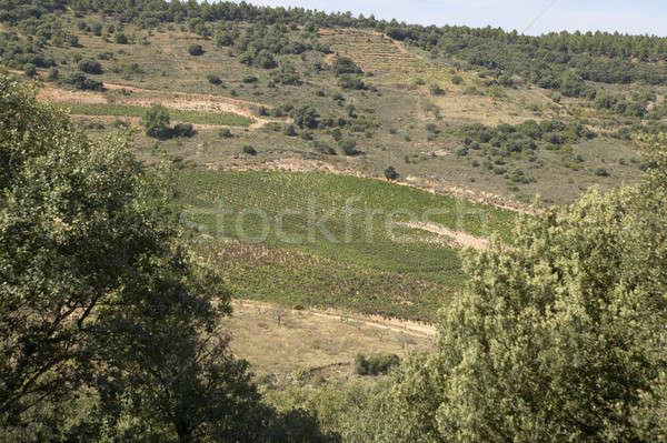 Vina paisaje cosecha tiempo espanol soleado Foto stock © ABBPhoto