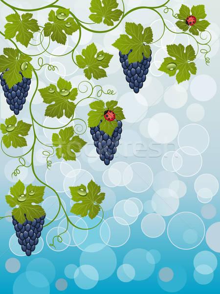 Stockfoto: Wijnstok · natuur · vruchten · achtergrond · zomer
