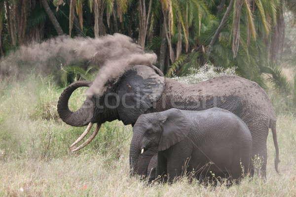 слон Серенгети тело зеленый голову Сток-фото © AchimHB