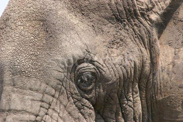 слон голову Серенгети тело зеленый Сток-фото © AchimHB