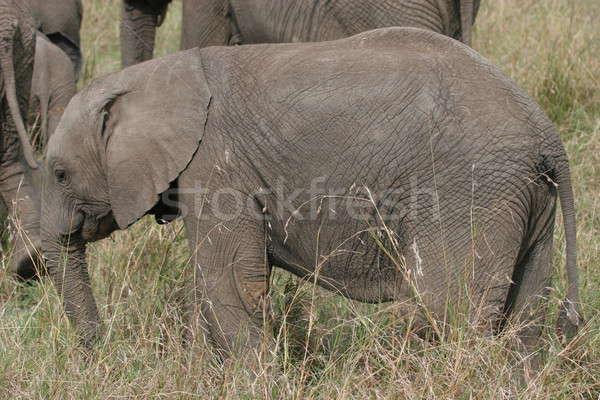 Elefánt medvebocs sétál Serengeti test zöld Stock fotó © AchimHB