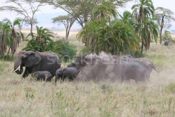 слон ходьбе Серенгети тело зеленый Сток-фото © AchimHB