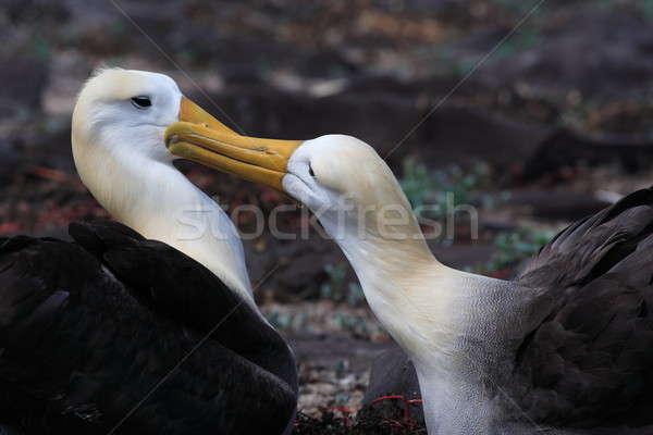 пару свадьба Dance животного ухода Сток-фото © AchimHB