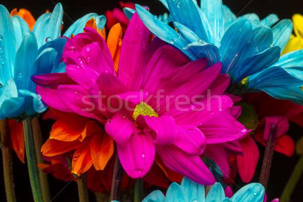 цветы красочный черный студию среде цветок Сток-фото © actionsports