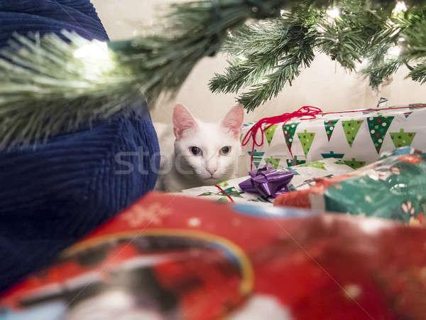 Fêtes Noël présente arbre chat heureux Photo stock © actionsports