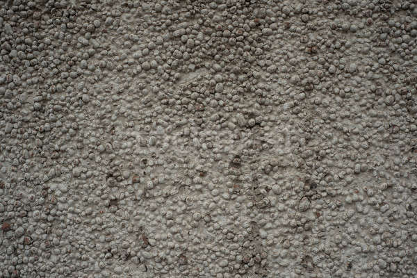Cement wall Stock photo © adam121