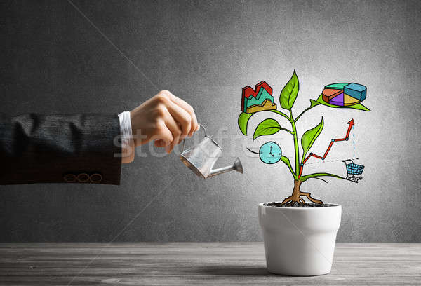 Stock photo: Drawn income tree in white pot for business investment savings and making money